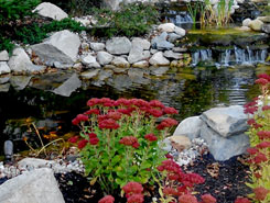 Red Flowers and Pond